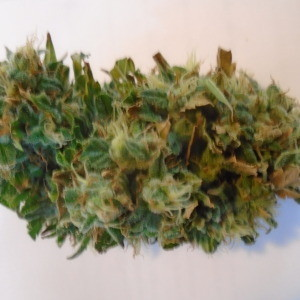 Aurora Borealis Seeds For sale at Weed For Sale Canada